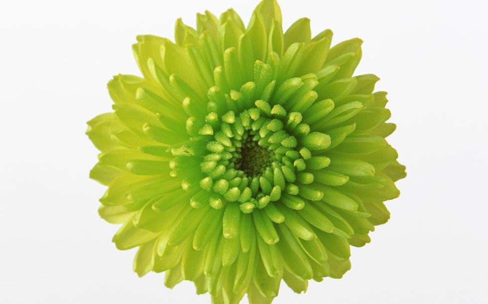 green-flower-105137